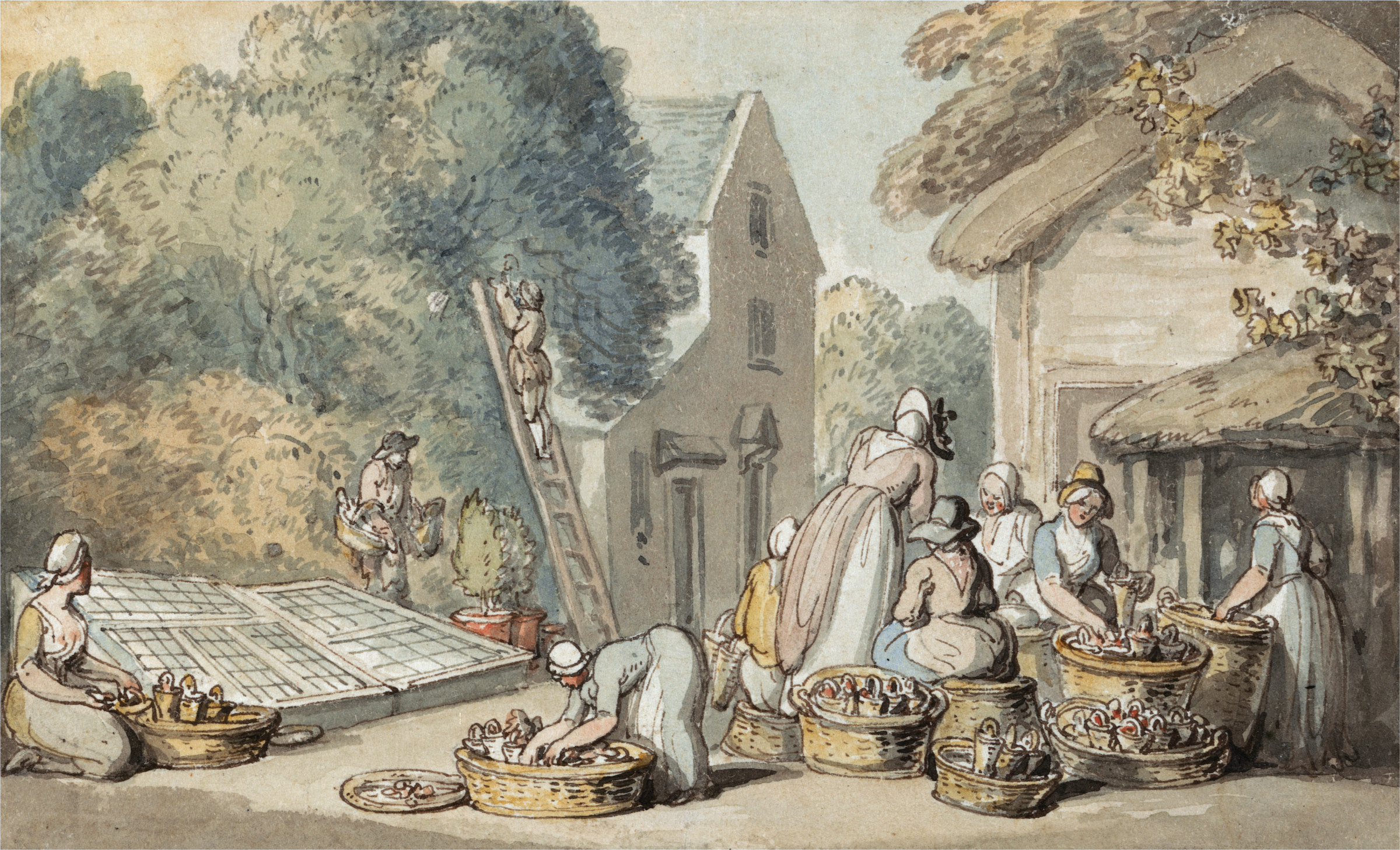 Picking Mulberries By Thomas Rowlandson
